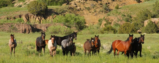 Wild Horses of Huerfano County