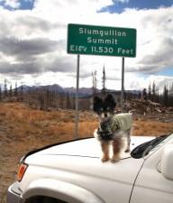 Mr. Skeeto at Slumgullion Pass Summit
