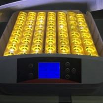eggs incubator