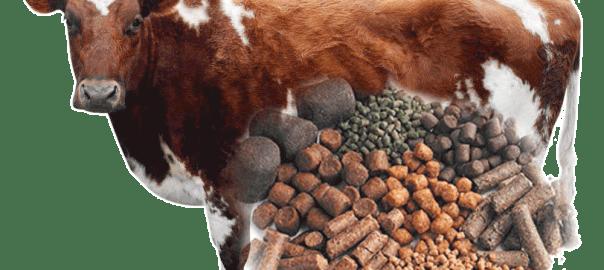 cattle feed pellets
