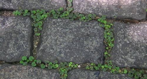 Paving stones or pavers in driveways allow plants to grow and stormwater to drain into the soil.