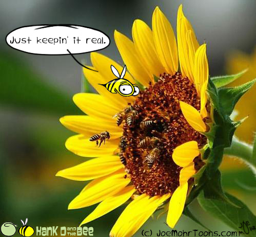 Hank D and the Bee: Bee keeping...