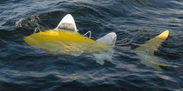 Robofish Detects Sea Pollution