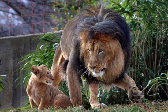 leon cachorro1
