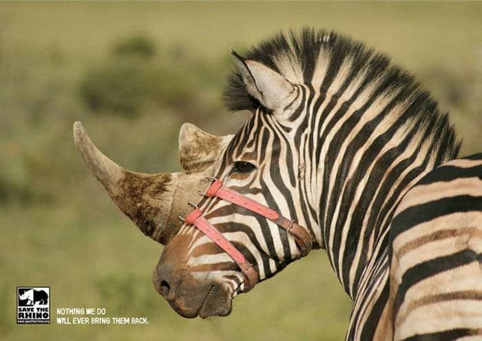 Salvemos el rinoceronte1