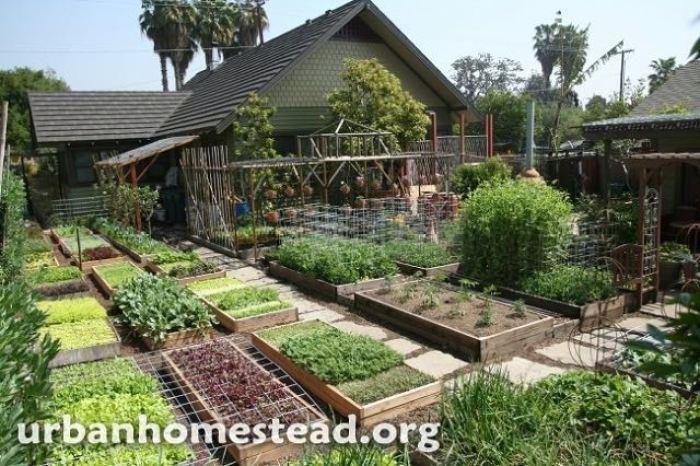 Como cultivar mas de 2700 kg de alimentos en 400 m2