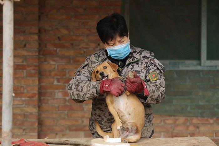 Qué hacer ante un caso de maltrato animal Estas-mujeres-chinas-se-despiertan-a-las-4-de-la-ma%C3%B1ana-para-alimentar-1300-perros-callejeros