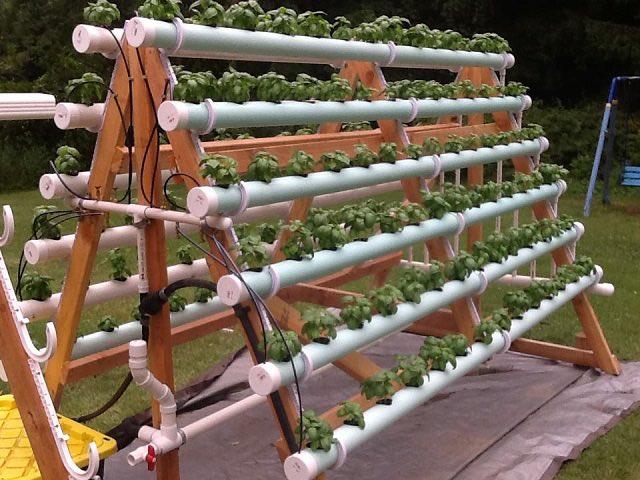 c mo crear un sistema hidrop nico casero con 168 plantas