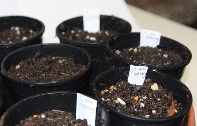 Método para germinar semillas más rápido