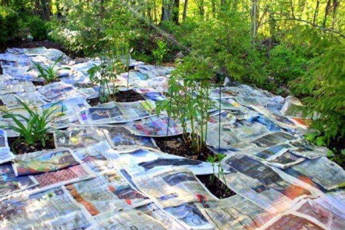acabar con las malas hierbas con papel periódico