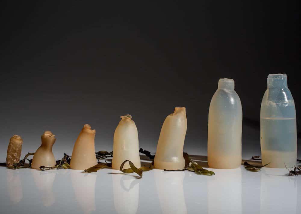 Un estudiante islandés utiliza algas para crear una botella biodegradable
