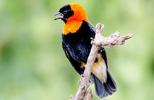 Wildlife Safaris and birding