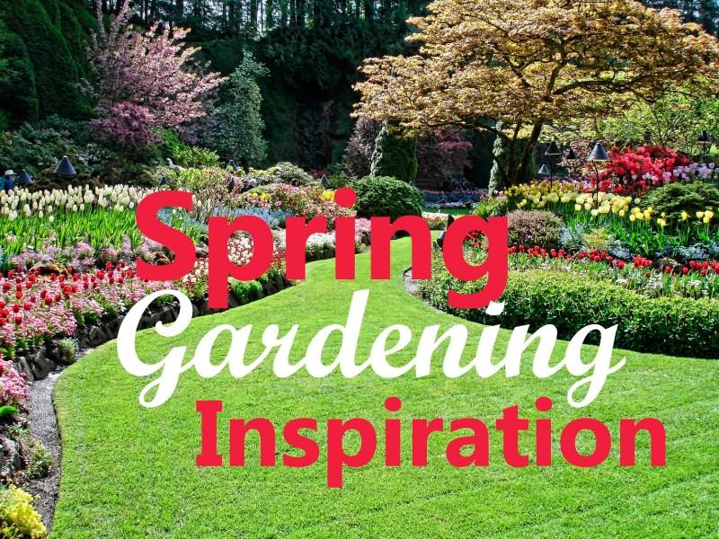 Large Of Backyard Gardening Blog