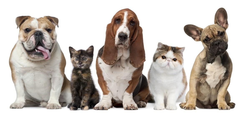 pet health care spending