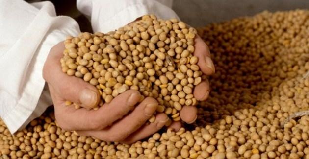 ¿Qué nos espera en el mercado de granos?
