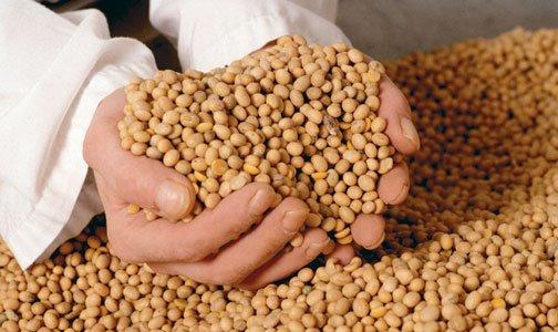 La soja imparable, con maíz y trigo despegando pero más lentos