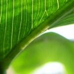 Mit Bioenergie den Klimawandel stoppen