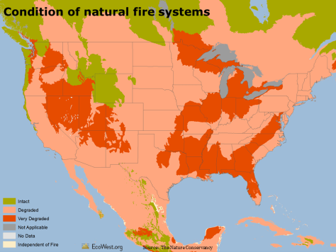 Condition of natural fire systems