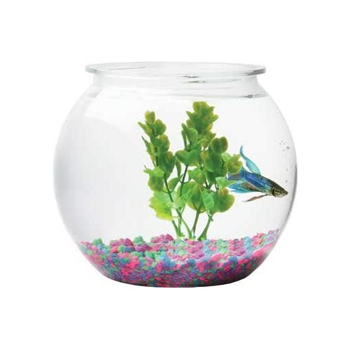 Amazon.com : AQUARIUM FISH TANK BOWL ROUND PLASTIC 1.5 GALLON : Pet