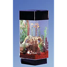 Like or share 28 Gallon Stretched Octagon Coffee Table Aquarium Form