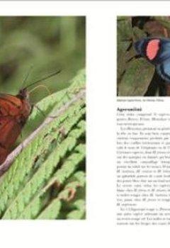 Livres Couvertures de Papillons du monde