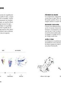 Livres Couvertures de Le vin par Antoine Pétrus: Meilleur Ouvrier de France - Sommelier