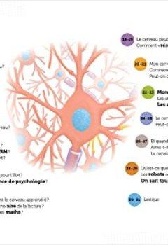 Livres Couvertures de Mon cerveau - Questions/Réponses - doc dès 7 ans (49)