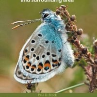 A Photographic Guide to Insects of the New Forest and Surrounding Area.