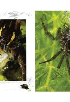Livres Couvertures de Arachna : les voyages d'une femme araignée