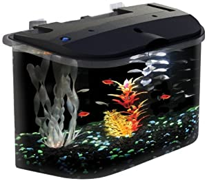 Aquarius 5 Rounded 5 Gallon Aquarium Kit: Amazon.co.uk: Pet Supplies