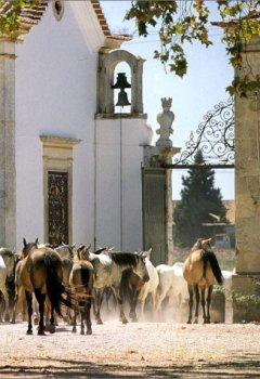 Livres Couvertures de L'art de vivre au Portugal