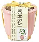 和心盆栽栽培セット 桜 GD-4204