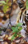 Livres Couvertures de Les Tigres