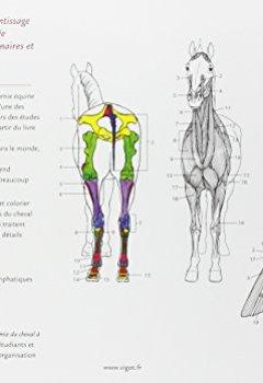 Livres Couvertures de Anatomie du cheval à colorier : Une aide à l'apprentissage de l'anatomie du cheval