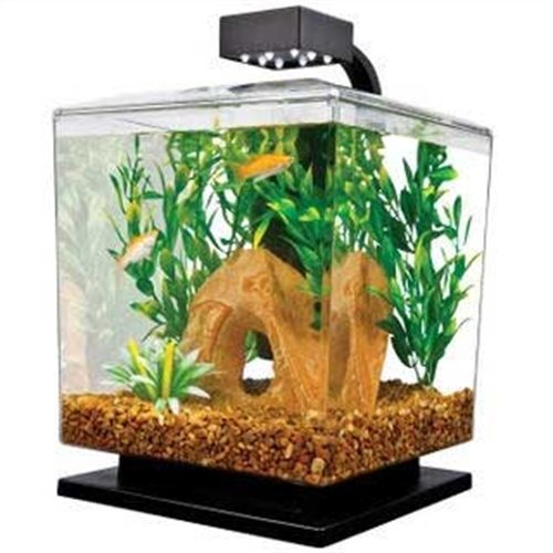 Good Betta Fish Tanks: Aquarium Reviews & Tips