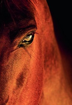 Livres Couvertures de Equine beauty : A study of horses, édition français - anglais - allemand - espagnol