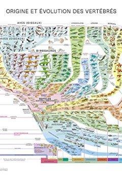 Livres Couvertures de Atlas des vertébrés - Poster Origine et évolution des vertébrés