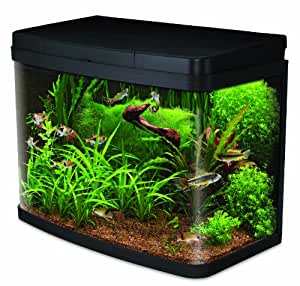 Interpet Insight Glass Aquarium Fish Tank Premium Kit   40 Litre