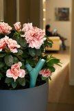 Sensor de plantas Parrot Flower Power colocado en un tiesto para medir los parámetros de la planta