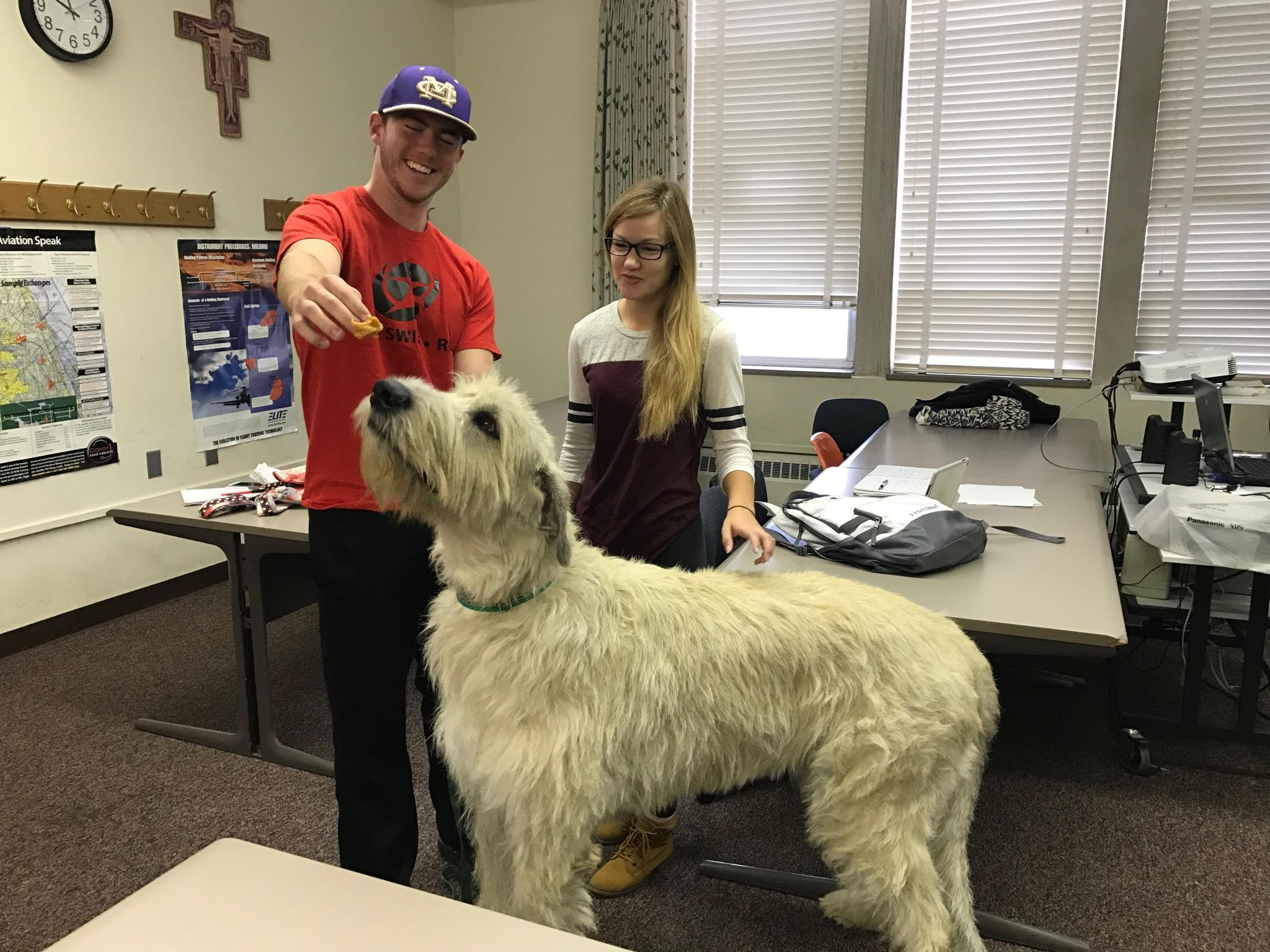 Gracious Dogs Quincy University Students Discover Biology Dogs Quincy Quincy Dog Going On A Road Trip Quincy Dog Finds A Girlfriend Quincy University Students Discover Biology bark post Quincy The Dog