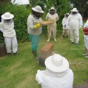 Honeychild - Beekeeping Theory in Rheenedal 1e