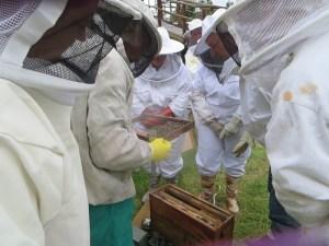 Honeychild - Beekeeping Theory in Rheenedal 1f