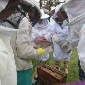 Honeychild - Beekeeping Theory in Rheenedal 1f
