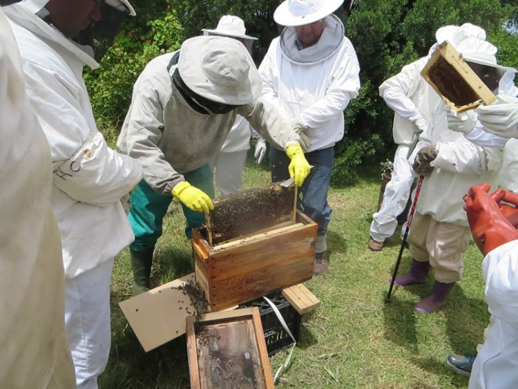Honeychild - Beekeeping Theory in Rheenedal 1l