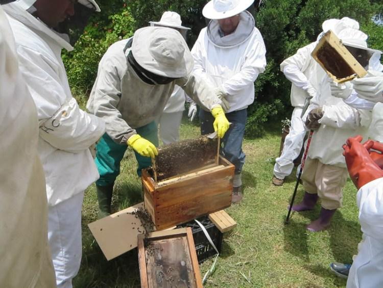 Honeychild - Beekeeping Theory in Rheenedal 1l