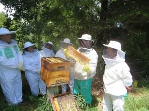 Honeychild - Beekeeping Theory in Rheenedal 1o