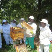 Honeychild - Beekeeping Theory in Rheenedal 1o