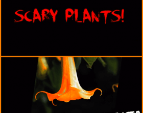 Scary-Plants-Brugmansia-EdenMakersBlog