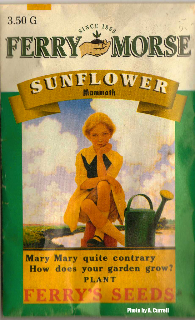 Sunflower-Seed-Packet-Ferrys-Seeds-Vintage
