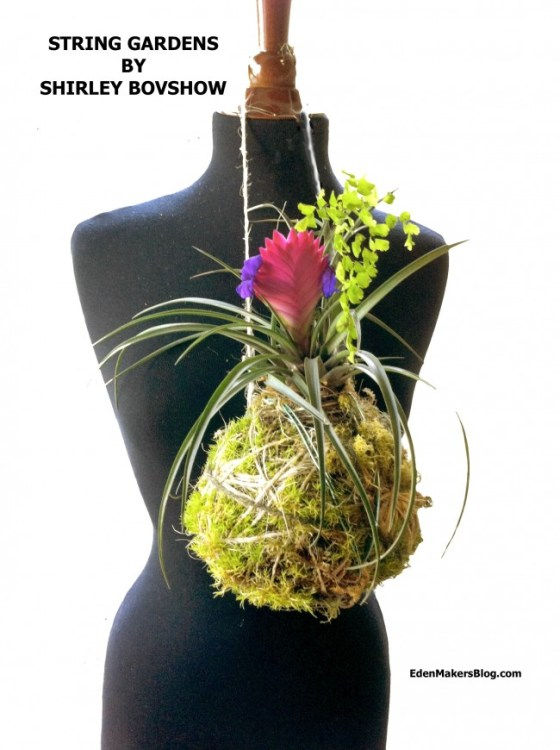 Kokedama-string-garden-tsillandsia-fern-shirley-bovshow-edenmakersblog.com